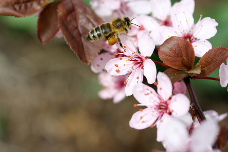 An insect sucks nectar from a pink colored flower