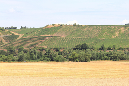 A landscape with vineyards, cornfields and woods
