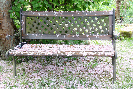 One with pink-colored cherry blossoms, covered garden bench