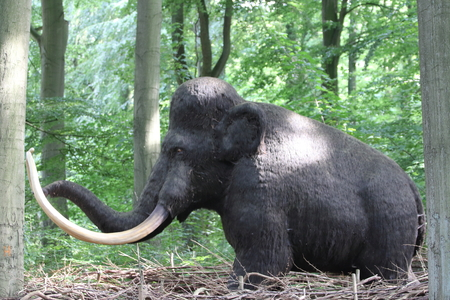 A mammoth is any species of the extinct genus Mammuthus, proboscideans commonly equipped with long, curved tusks and, in northern species, a covering of long hair Фото со стока