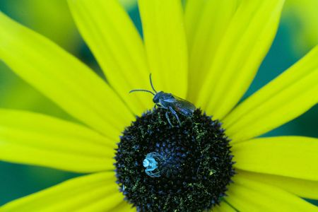 small spider standing on the yellow flower photo