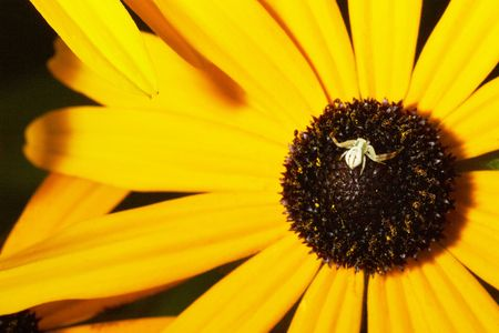 small spider standing on the yellow flower Stock Photo - 2662386