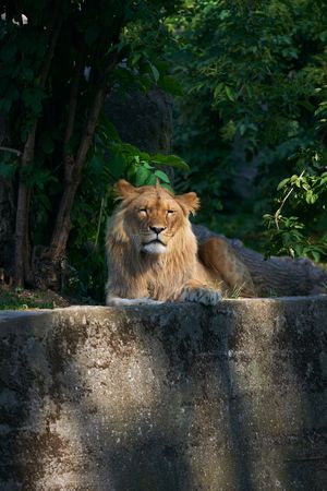 Portrait of a big male lion Stock Photo - 3089136
