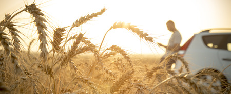 男の麦畑で彼の車で引っかかっている黄金の夕日 写真素材