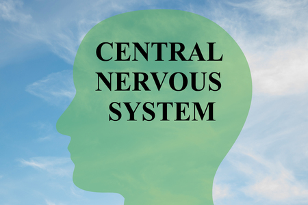 central nervous system: Render illustration of CENTRAL NERVOUS SYSTEM script on head silhouette, with cloudy sky as a background. Human brain concept.