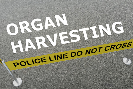 3D illustration of ORGAN HARVESTING title on the ground in a police arena