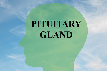 Render illustration of PITUITARY GLAND script on head silhouette, with cloudy sky as a background.