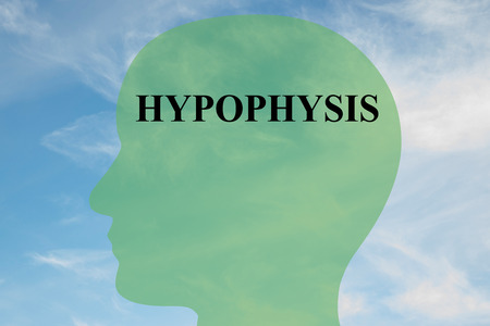 midbrain: Render illustration of HYPOPHYSIS script on head silhouette, with cloudy sky as a background.