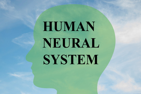 sensory receptor: Render illustration of HUMAN NEURAL SYSTEM script on head silhouette, with cloudy sky as a background. Stock Photo