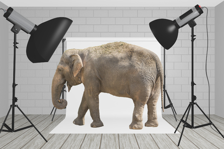 Elephant stands at the center of a photography studio with flashes and light softeners Reklamní fotografie