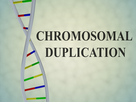 3D illustration of CHROMOSOMAL DUPLICATION script with DNA double helix , isolated on pale blue background.