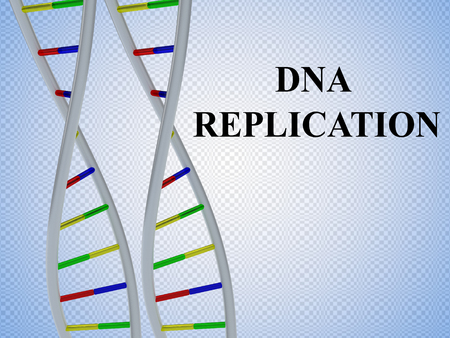 3D illustration of DNA REPLICATION script with two identical pairs of DNA double helix