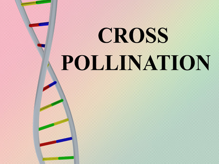 3D illustration of CROSS POLLINATION script with DNA double helix , isolated on colored gradient.
