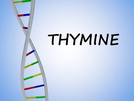 3D illustration of THYMINE script with DNA double helix , isolated on blue gradient.