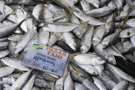 Kelana Jaya,Petaling Jaya,Selangor,Malaysia-11th November 2017 : pile of mackerel for sale with price tag at fresh market (pasar tani fama). Editorial