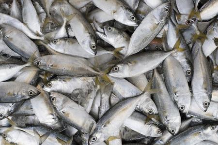 pile of mackarel fish (ikan kembung) for background,wallpaper and backdrop