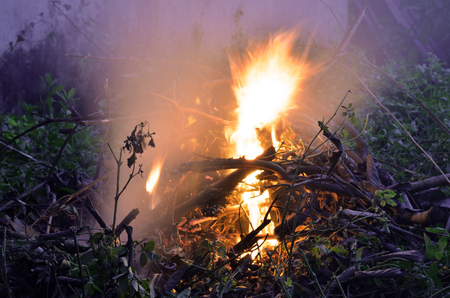 flames of fire in dark background.burned rubbish at dusk Stock Photo