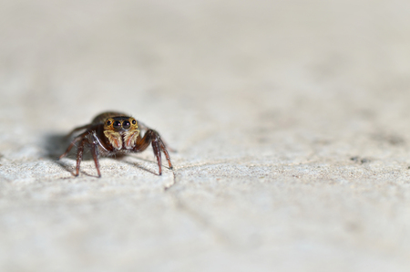 The jumping spider family (Salticidae) contains over 600 described genera and more than 5800 described species