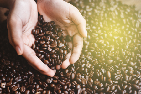 High angle close up of man holding coffee beans in cupped hands. favourite drink and agricultural concept