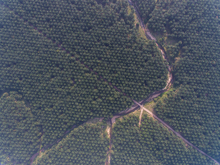 aerial top view of a Palm Oil Plantation with road and river located in kota bharu, malaysia