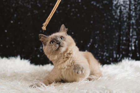 cute little cat is very playful. Domestic animal theme