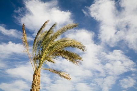 Lonely palm on a background of the sky and clouds Stock Photo - 650167