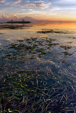 seascapes: Seaweed In Low Tide
