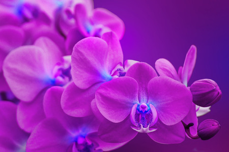 Colorfull Orchids                                photo