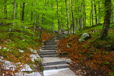 bohinj: Stone stairs in green spring forest to waterfall Savica in Triglav national park near Bohinj lake, Slovenia Stock Photo