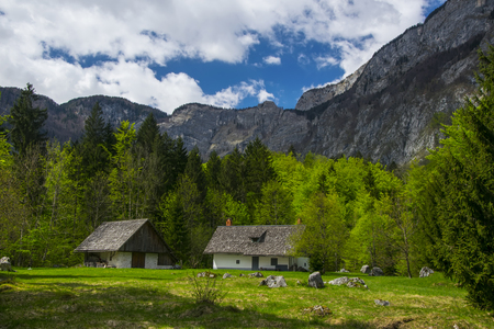 Bohinj valley in Slovenia with buildings and spring forest in foreground and mountain wall in background