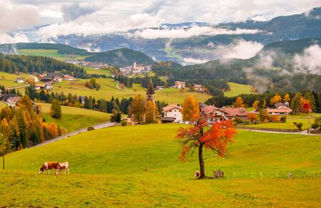 Beautiful autumn scenery of San Michele and Castelrotto villages with mountains in clouds on background and red tree and cows on pasture on foreground. Dolomite Alps, South Tyrol, Italy