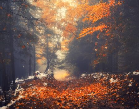 Autumn scenery of forest lane on a foggy morning. Soft focus applied