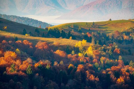 Colorful autumn scenery in the Carpathian mountains at the morning, Ukraine. Multicolored autumn trees illuminated by rising sun