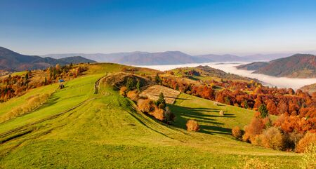 Amazing autumn scenery in the Carpathian mountains. Colorful hills in sunlit and the fog sits below