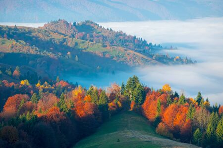 Amazing autumn morning in the Carpathian mountains. Colorful hills at sunlit and the fog sits below Banco de Imagens