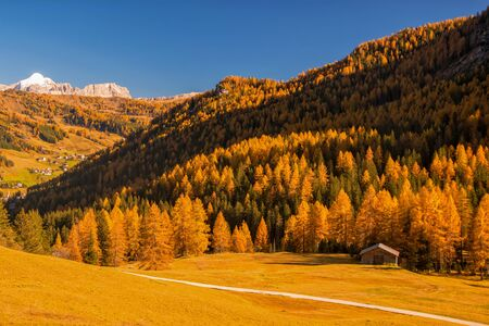 Incredible view of yellow trees illuminated by the rising sun. Colorful autumn morning in Dolomite Alps, Alta Badia location, Italy. Beauty of nature concept background.