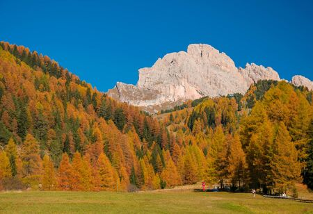 Incredible view of yellow trees illuminated by the rising sun. Colorful autumn morning in Dolomite Alps, Val Gardena location, Italy. Beauty of nature concept background.