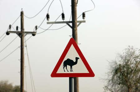 Inicio de sesión de camellos Road Foto de archivo - 5976884
