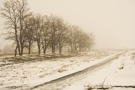 Foggy winter landscape with leafless trees in sepia photo