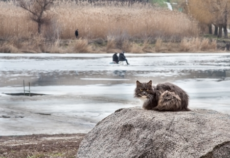 Cat on a rock near a frozen river in anticipation of the catch