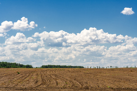 ploughed field: Ploughed field on the background of blue sky with clouds