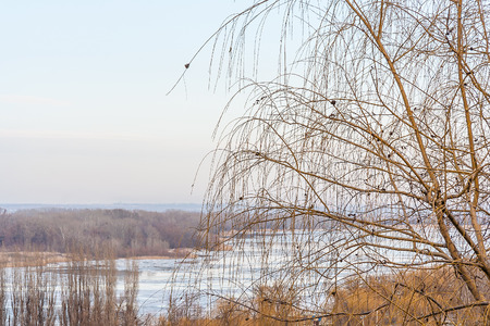 Weeping willow on a background of a winter landscape with a frozen river photo