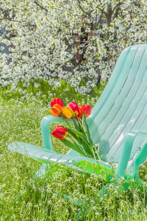 Deckchair and a bouquet of tulips in the spring garden against the backdrop of cherry blossoms photo