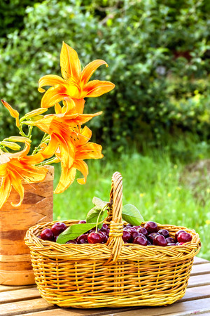 birch bark: Ripe cherries in a wicker basket and flowers daylily in a vase made of birch bark on a wooden table on a background of the garden, backlit