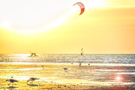 papalote: Gaviotas en la playa contra el mar y la puesta de sol de oro, con retroiluminación