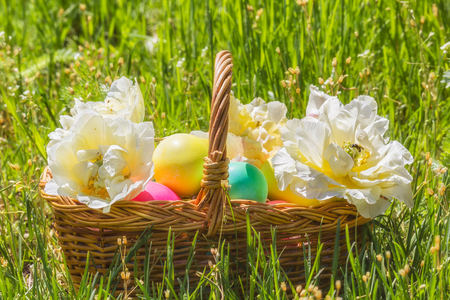 tulips in green grass: Wicker basket with painted easter eggs and white double tulips  in the green grass on a sunny spring day Stock Photo