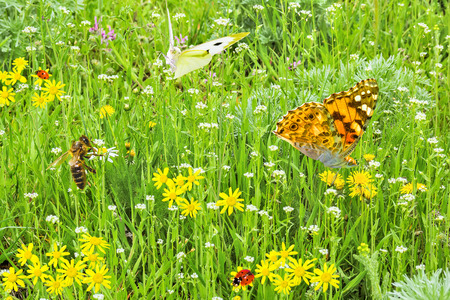 Collage - green lawn with wild flowers, butterflies, ladybirds and bee on a sunny spring day