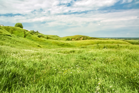 windy day: Green hills and wild flowers in the beginning of summer on a windy day