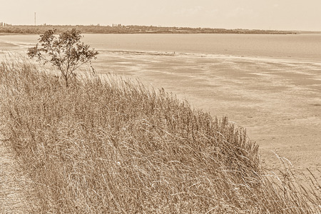 gently: Gently sloping shore of the sea bay, is overgrown with wild herbs, sepia