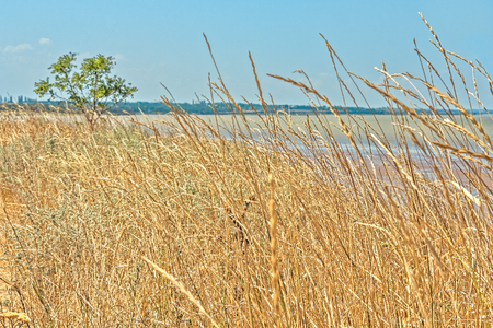 sloping: Gently sloping shore of the sea bay, is overgrown with wild herbs Stock Photo